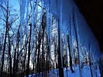 Grand Cabin photos 014